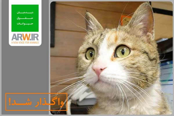 http://arw.ir/wp-content/uploads/2012/11/Animal-Rights-Watch-ARW-Adopted002.jpg
