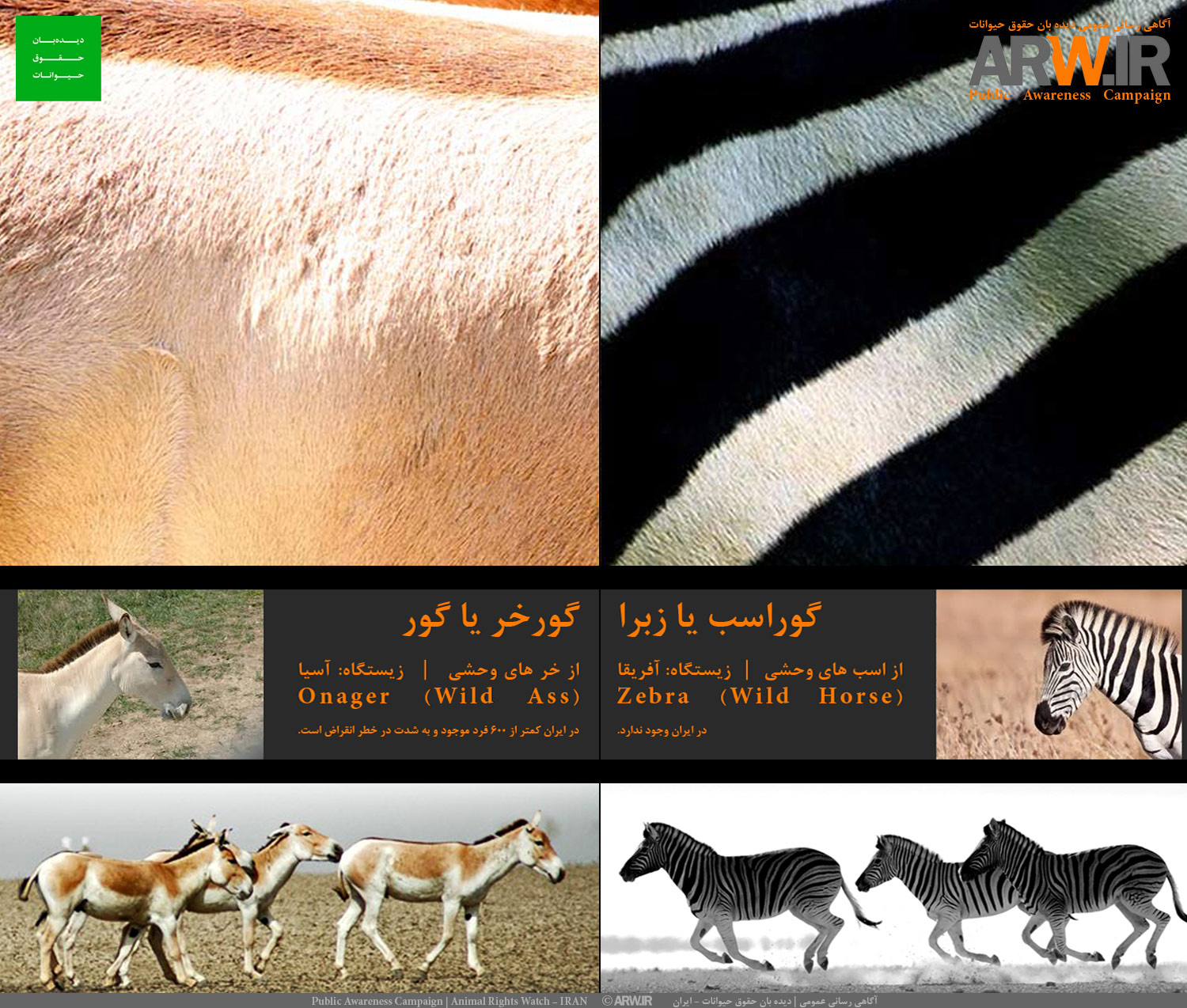Animal-Rights-Watch-ARW-5595-Public-Awareness-Campaign