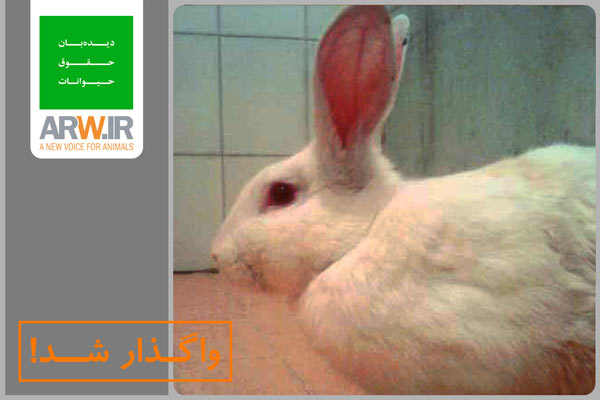 Animal-Rights-Watch-ARW-Adopted003