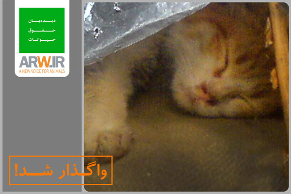 http://arw.ir/wp-content/uploads/2013/04/Animal-Rights-Watch-ARW-Adopted004.jpg