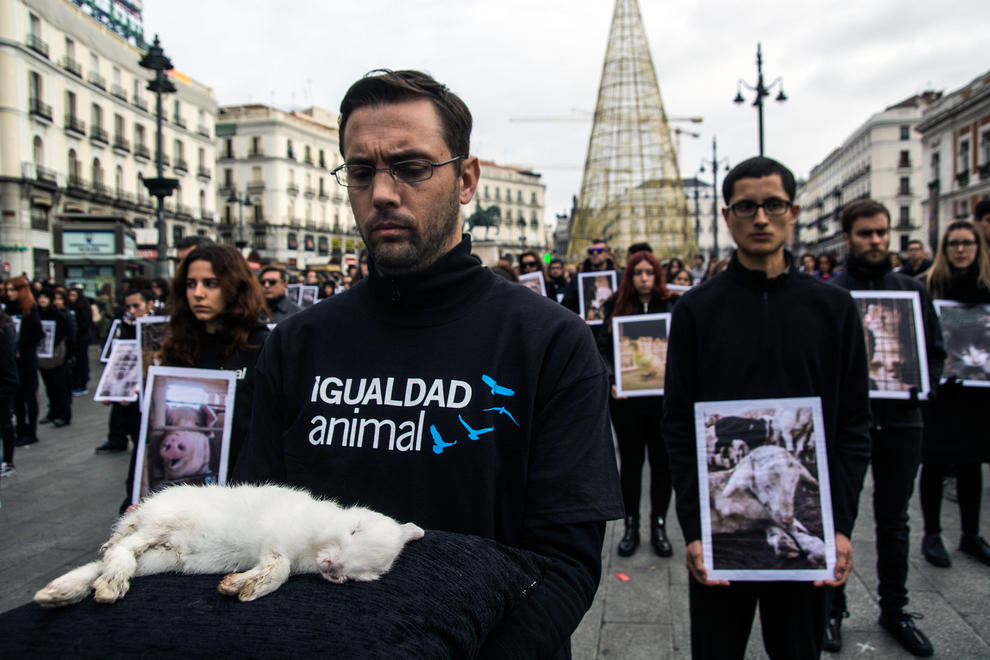 Dec. 12, 2015 - Madrid, Madrid, Spain - A man with a dead rabbit protest against animal testing and abuse during the International Day of Animal Rights. (Credit Image: © Marcos Del Mazo/Pacific Press via ZUMA Wire)